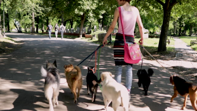 frau mit gruppe von adoptierten hunden reitet rollschuhe im park - hundesitter stock-videos und b-roll-filmmaterial