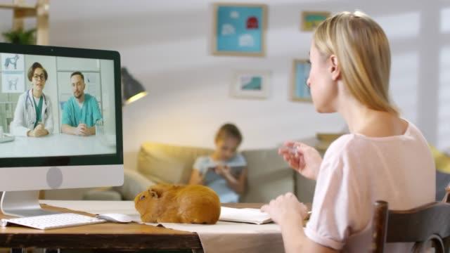 kvinna med marsvin consulting med online vets - veterinär, undersökning bildbanksvideor och videomaterial från bakom kulisserna
