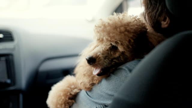 frau mit ihrem hund in einem auto unterwegs. slow-motion. - dog car stock-videos und b-roll-filmmaterial