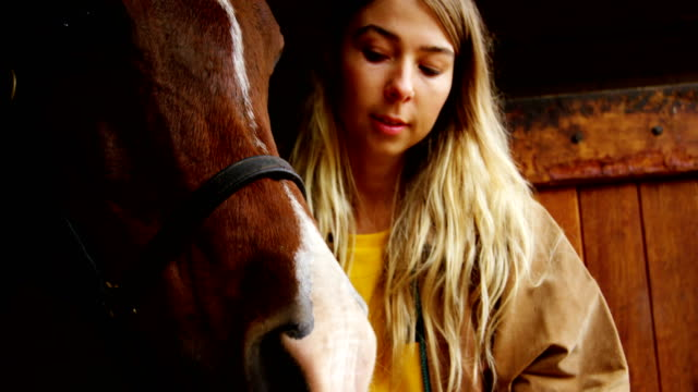woman with horse in stable 4k - equino video stock e b–roll