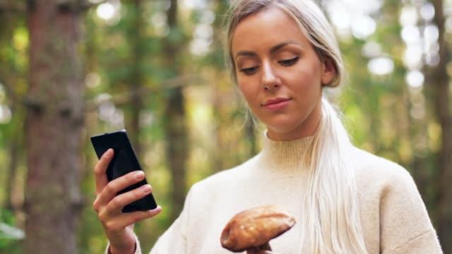 kvinna med svamp och smartphone i skogen - höst plocka svamp bildbanksvideor och videomaterial från bakom kulisserna