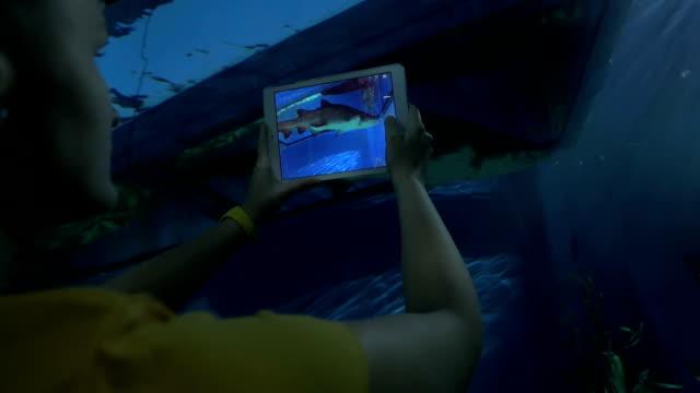 Woman with pad taking shot of sea animal in oceanarium video