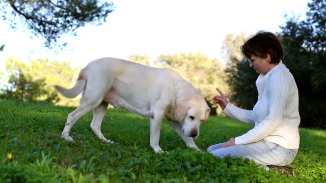 woman with  senior labrador dog video