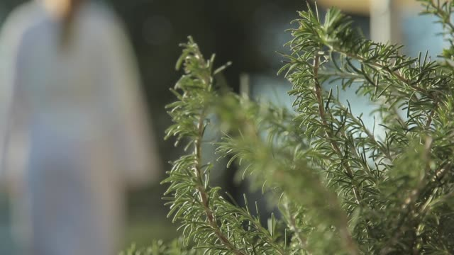 woman with spa bathrobe walking behing rosemary plants - video