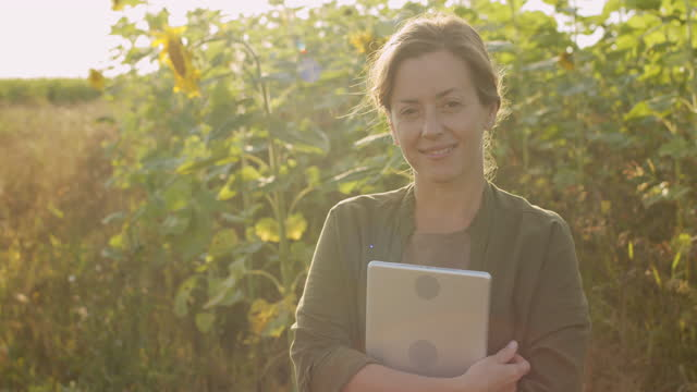 Woman With Tablet In Sunflower Field