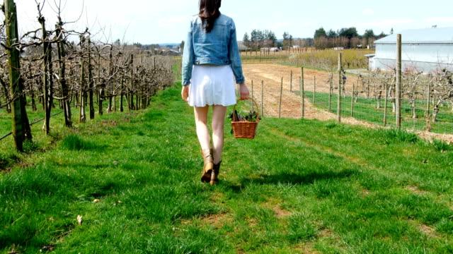 Woman with vegetable basket walking in a vineyard 4k video