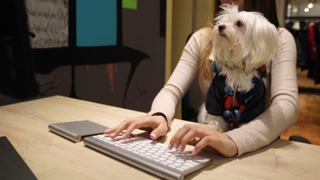 ペットフレンドリーなオフィスで彼女のかわいいマルタの犬と一緒に働いて時間を楽しむ女性 - 愛玩犬点の映像素材/bロール