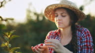 istock Woman working in cherry plant on a warm and sunny summer morning 1253116550
