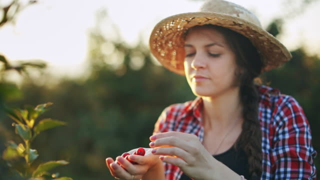 Woman working in cherry plant on a warm and sunny summer morning