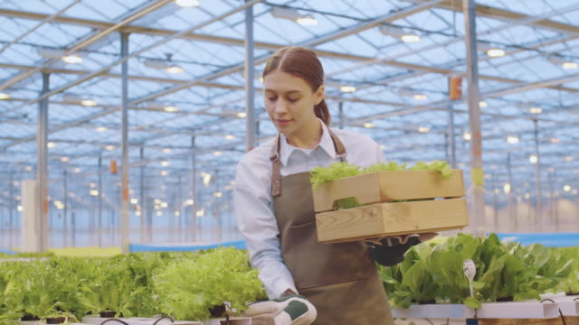 woman working in hothouse - orticoltura video stock e b–roll