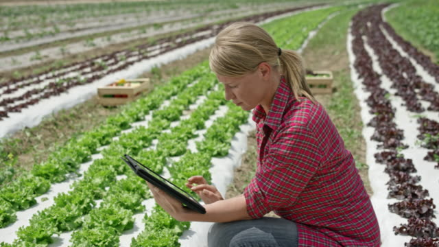 woman working with the use of a digital tablet in the lettuce field - agricoltrice video stock e b–roll