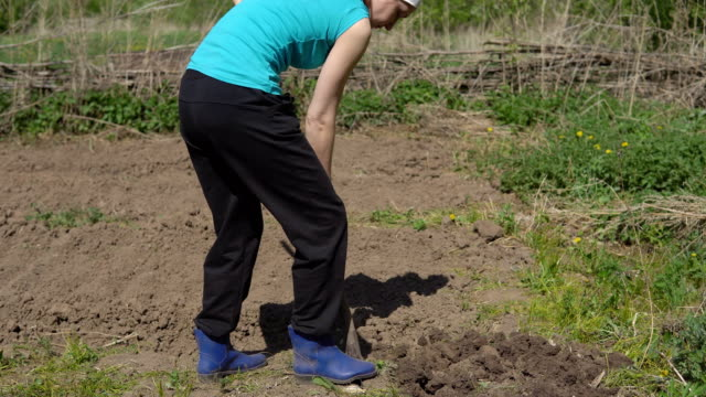 woman works in the garden with a shovel. sowing season in rural areas