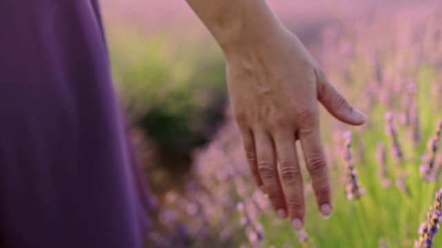 LA CU Woman's hand caressing lavender flowers