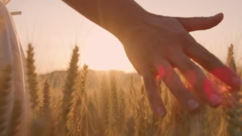le orecchie di grano accarezzando a mano ms woman sul campo con turbine eoliche in lontananza - campo video stock e b–roll