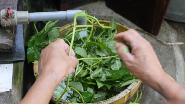 A woman's hand cleaning green vegetable leaves in faucet dirty kitchen.