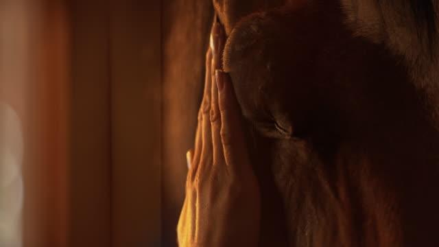 SLO 月女性の手をやさしく撫でる馬 ビデオ