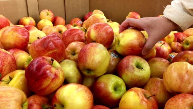 vídeos de stock e filmes b-roll de woman's hand picking apple inside walmart store - picking fruit