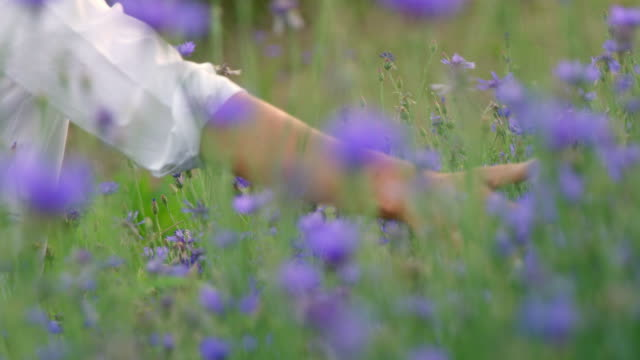 vídeos de stock e filmes b-roll de slo mo woman's hand touching cornflowers - granadilha