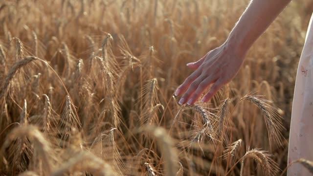 黄金の小麦の耳に触れる女性の手 - 尖っている点の映像素材/bロール