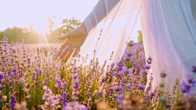 SLO MO Woman's hand touching lavender flowers video