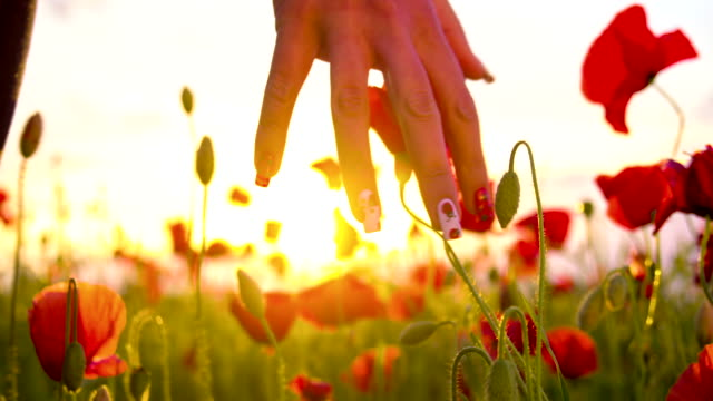 CU DS Woman's Hand Touching Poppy Flowers video