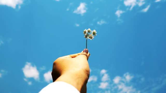 vídeos de stock, filmes e b-roll de mão de uma mulher com camisa branca está carregando flor pequena ao lado do sol e o azul do céu - hipster com expressão de lazer - dispersa