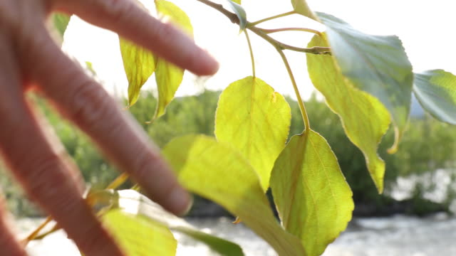 Woman's hands pull back foliage to reveal mountain river Rack focus view branch plant part stock videos & royalty-free footage