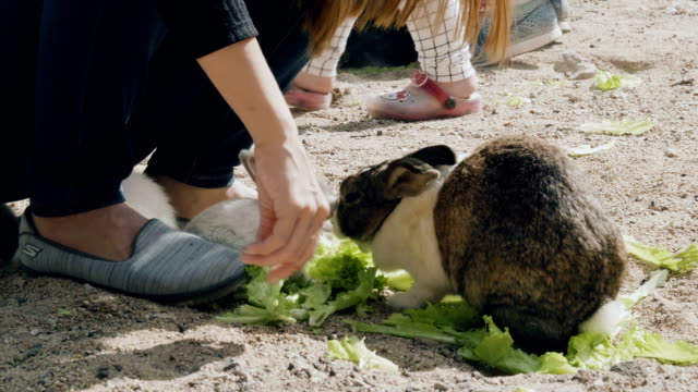 Women feeding cute fluffy light brown and white baby bunny