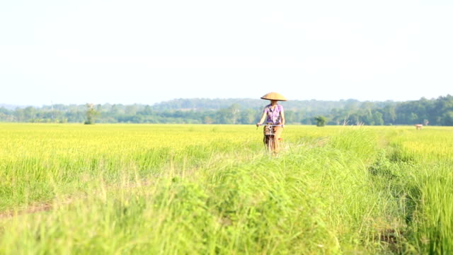 Women riding a bicycle in the rice field.