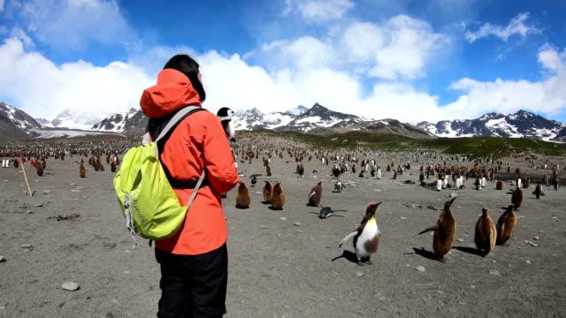 vídeos y material grabado en eventos de stock de mujer dispara a pingüinos en georgia del sur - viaje a antártida