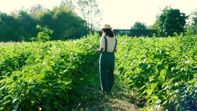 vídeos de stock e filmes b-roll de women smart farmer - comida sustentavel
