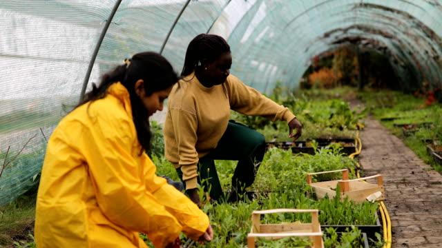 vídeos de stock e filmes b-roll de women taking care of plants in an ecological garden - estufa estrutura feita pelo homem