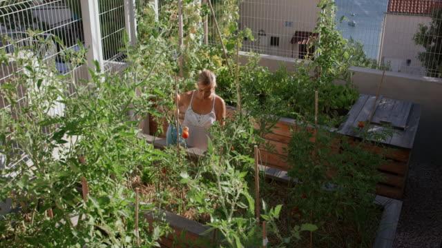 pan-frauen, die bewässerung von pflanzen im sonnigen garten - dachgarten videos stock-videos und b-roll-filmmaterial