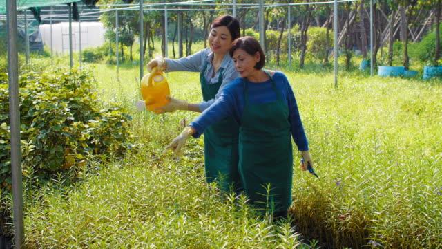 女性の植物に水をまく ビデオ