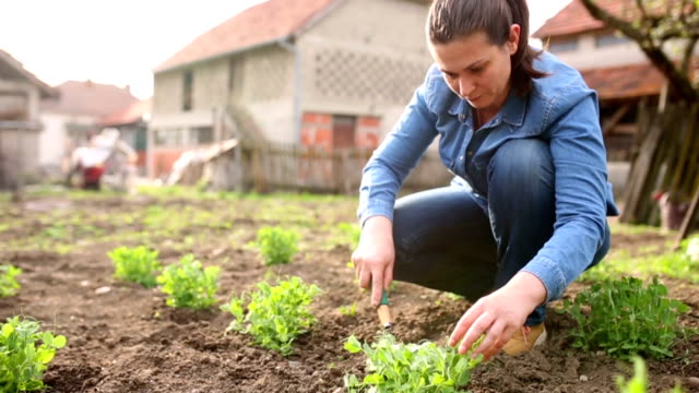 Women working in the garden Women working in the garden horticulture stock videos & royalty-free footage