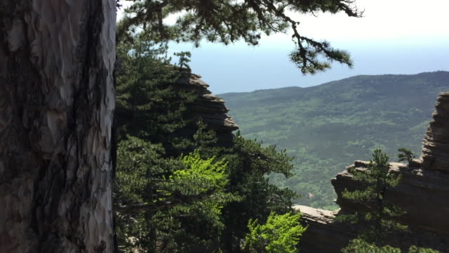 Wonderful landscape with mountains valley covered of green forest and rock wall.