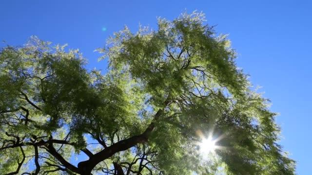 美妙的陽光明媚的一天在樹上 - 熱帶樹 個影片檔及 b 捲影像