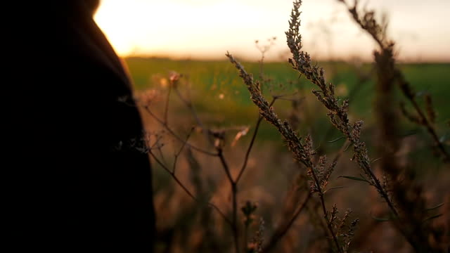 Wonderful sunset in the nature. Close-up of flora. Man is going through green field. Man s silhouette. Slow mo video