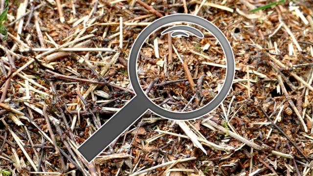 legno ants sotto una lente di ingrandimento - lente strumento ottico video stock e b–roll