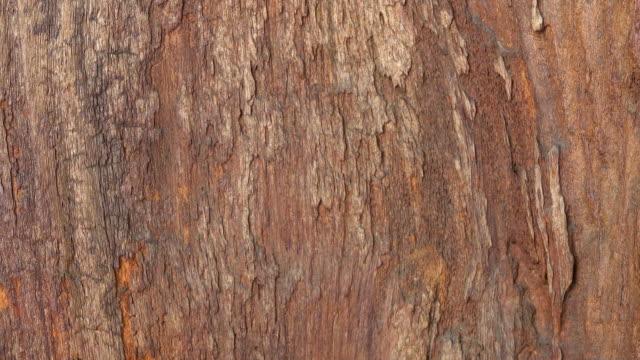 Wood Background Slide Up Shot