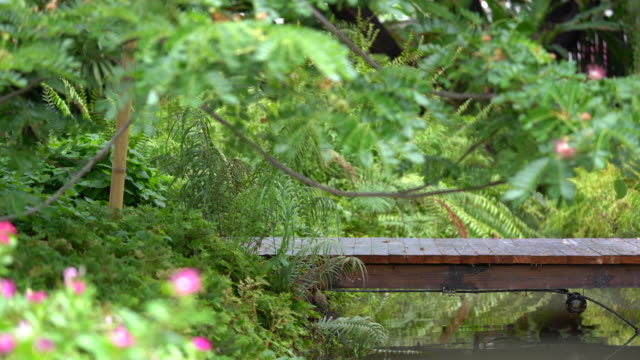 Wood bridge in the Abundant Garden with fern, East Indian Walnut tree, and small river.