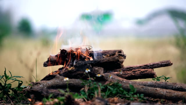 Wood burns in a campfire video
