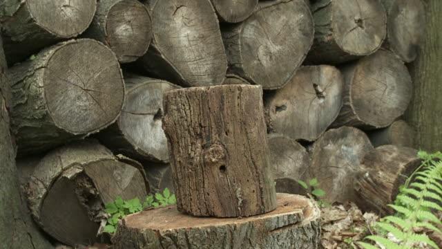 Wood Chop 24_04S video