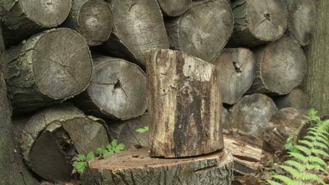 wood chop 24_05s - şömine odunu stok videoları ve detay görüntü çekimi