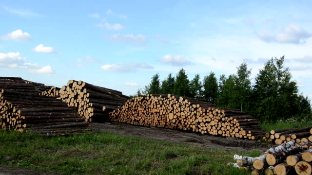 Wood felling industry. Stack birch and pine tree logs in autumn Wood felling industry. Stacked birch and pine tree logs in autumn. biomass renewable energy source stock videos & royalty-free footage