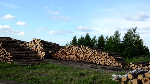дерево рубки отрасли. стека березы и сосны журналы дерево осенью - биомасса возобновляемая энергия стоковые видео и кадры b-roll