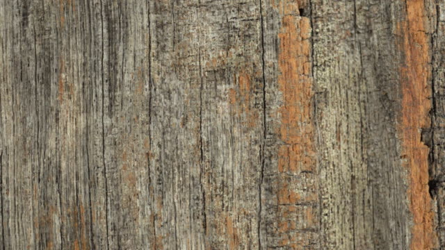 wood texture in vertical line