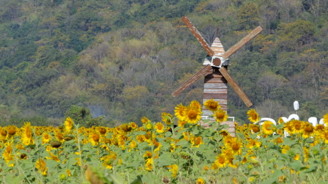 Wood wind turbine. video