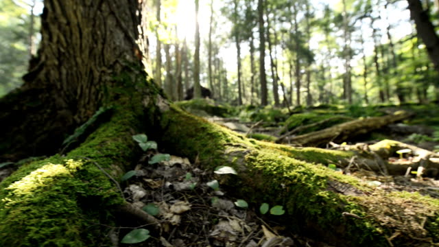 Wooded Forest Ground video