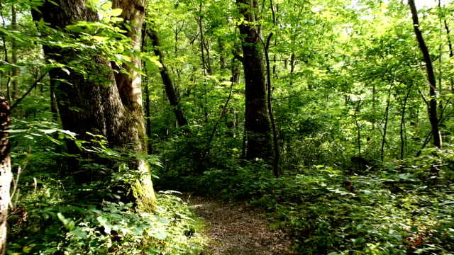 Wooded Path video